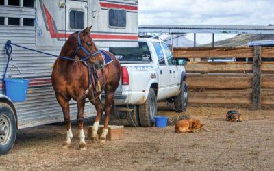 Camion chevaux : Comment choisir un camion pour tirer votre remorque à chevaux ?